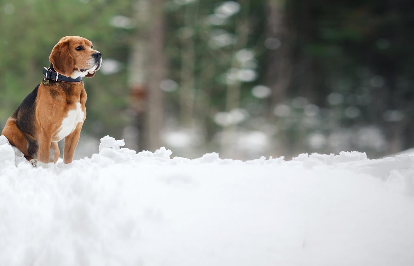 Winterurlaub mit Hund in Serfaus-Fiss-Ladis in Tirol.
